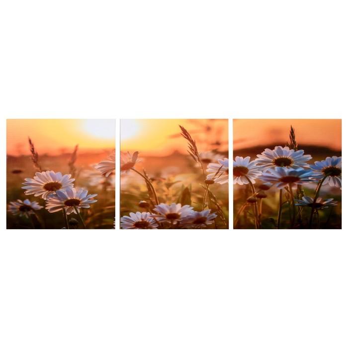 Модульная картина Ромашки в закате 3-35х35 35х105 см