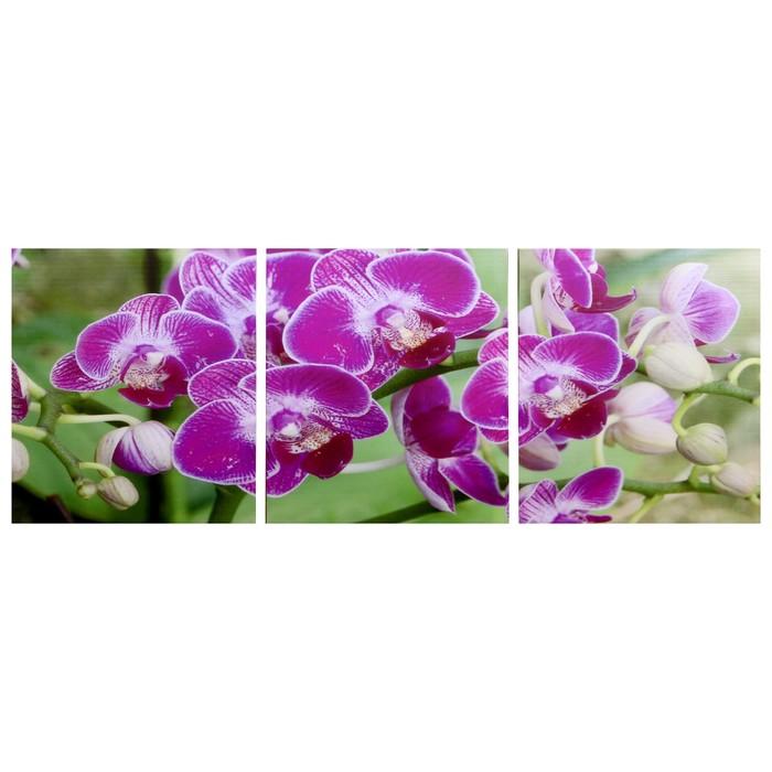 Модульная картина Веточка орхидеи 3-35х35 35х105 см