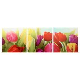 Модульная картина 'Тюльпаны' (3-35х35) 35х105 см Ош