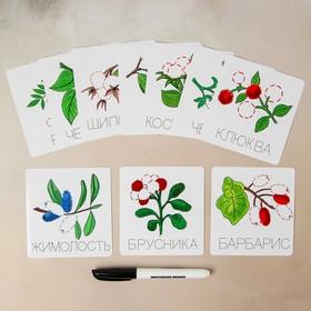 Карточки-прописи «Ягоды»