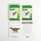Обучающие карточки по методике Глена Домана «Динозавры», 12 карт, А6, в коробке - Фото 2