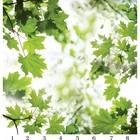 Панель потолочная PANDA Листья панно 4164 (упаковка 8 шт.), 3х2 м