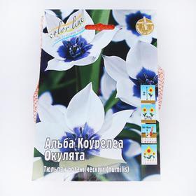 Тюльпан 'Альба Коурелеа Окулята' 10см, р/р 6/+, сетка 50 шт Ош