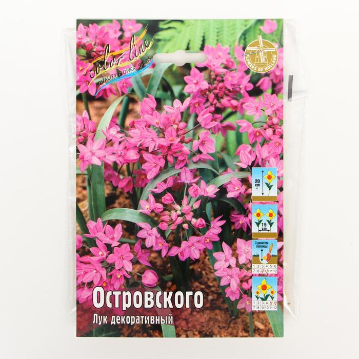 Аллиум лук декоративный ОСТРОВСКОГО р-р 4/+, 15 шт