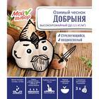 Чеснок озимый Добрыня 40+, упаковка 3 шт