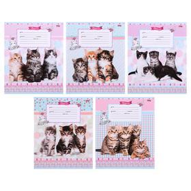 Тетрадь 12 листов в частую косую линейку «Милые котята», обложка мелованный картон, блок офсет, МИКС