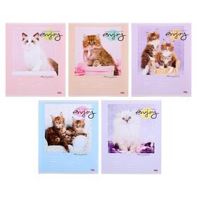 Тетрадь 24 листа в линейку «Парадные портреты котят», обложка мелованный картон, блок офсет, МИКС