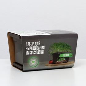 Набор для выращивания микрозелени - Кинза Ош