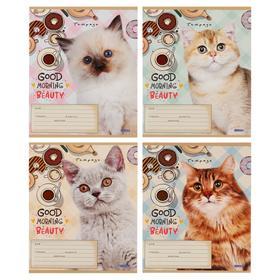 Тетрадь 12 листов в клетку «Котики и пончики», обложка мелованный картон, блок офсет, МИКС