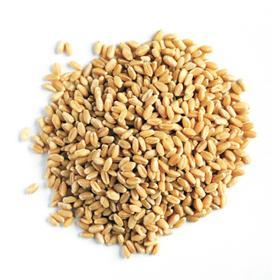 Семена Пшеница 25 кг