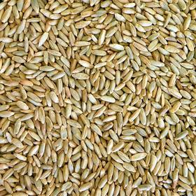 Семена Рожь  25 кг