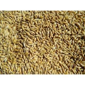 Семена Ячмень 25 кг