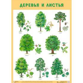 Развивающие плакаты. Деревья и листья, Нафиков Р. М.