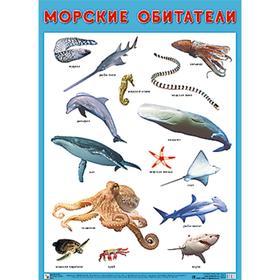 Развивающие плакаты. Морские обитатели, Нафиков Р. М.