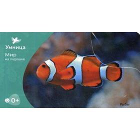 Мир на ладошке. Рыбы. Игры с карточками (24 карточки)