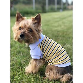 Футболка-поло Osso для собак, размер 22 (ДС 22, ОГ 32-34 см), жёлтая Ош