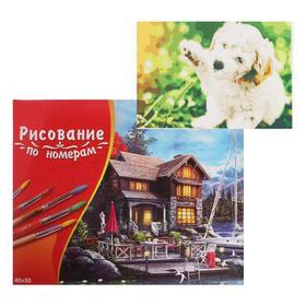 Картина по номерам 40×50 см в коробке, 20 цветов «Игривый щенок»