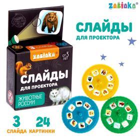 Слайды для проектора «Животные России», набор Ош