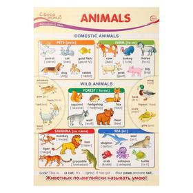 """Плакат """"Animals"""" А3"""