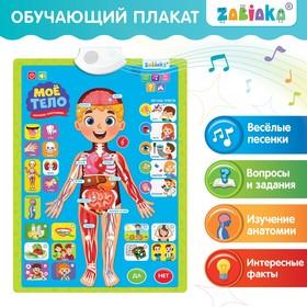 Обучающий плакат «Изучаем анатомию: Моё тело» Ош