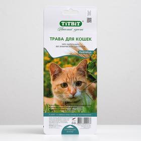 Трава TiTBiT для кошек, пшеница, 50 г Ош