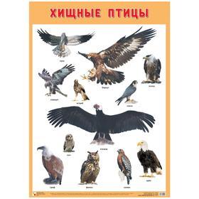 Плакат. Хищные птицы, А2