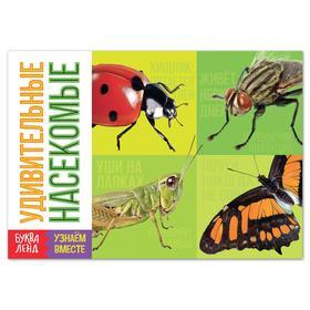 Обучающая книга «Удивительные насекомые», 20 стр.