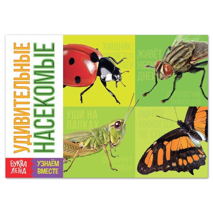 Обучающая книга Удивительные насекомые, 20 стр.