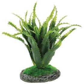 """Растение для террариума """"Алоэ"""", 20 см"""