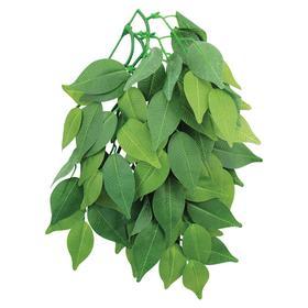 """Растение для террариума """"Фикус"""", 30 см"""