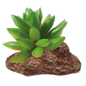 """Растение для террариума """"Толстянка"""", 9,5 х 7 х 9 см"""