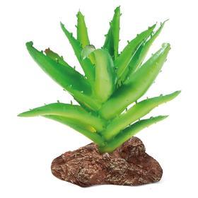 """Растение для террариума """"Алоэ"""", 9,5 х 6 х 13 см"""