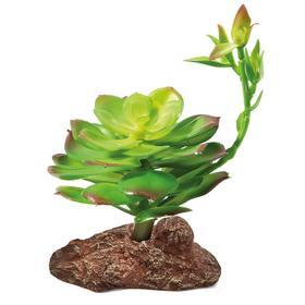 """Растение для террариума """"Эониум"""", 10х 10 х 16 см"""