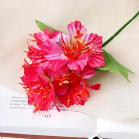 Цветы искусственные 'Адениум' 22см Ош