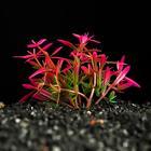 Растение искусственное аквариумное, 2,5 х 5 см