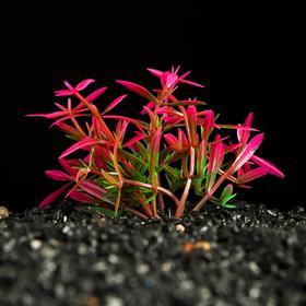 Растение искусственное аквариумное, 2,5 х 5 см Ош