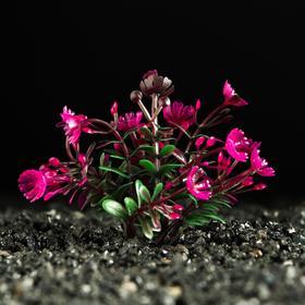 Растение искусственное аквариумное, 5 см Ош