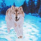 """Постельное бельё Традиция """"Волки"""" 1,5 сп., размер 147х215 см, 150х220 см, 70х70 см - 2 шт., 125 г/м2 - Фото 4"""