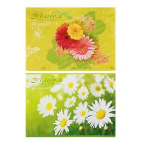 Альбом для рисования А4, 40 листов на скрепке Beautifull Flowers, обложка мелованный картон, блок офсет 100 г/м2, МИКС