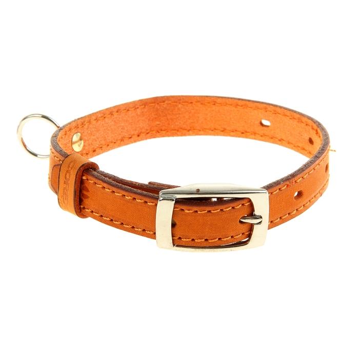 Ошейник кожаный, однослойный, 43,5 х 1,8 см, с выносным кольцом, безразмерный, микс цветов