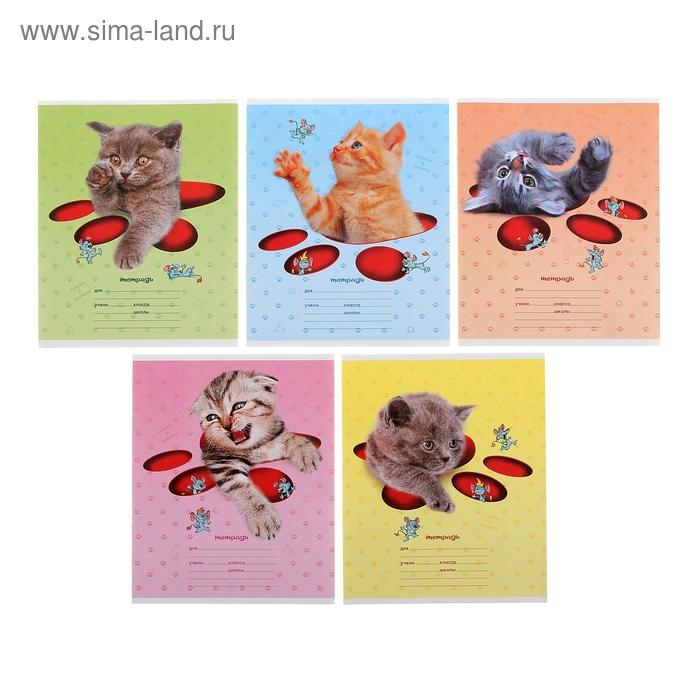 """Тетрадь 12 листoв клетка """"Кошки-мышки"""", картонная обложка, тиснение, 5 видов МИКС"""
