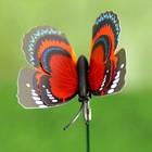 """Набор декоративного штекера 6 шт. """"Бабочка дельфиус"""" микс - Фото 6"""
