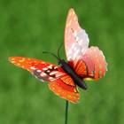 """Набор декоративного штекера 6 шт. """"Бабочка дельфиус"""" микс - Фото 10"""