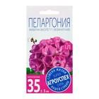 Семена комнатных цветов Пеларгония Маверик Виолет, 4 шт - Фото 2